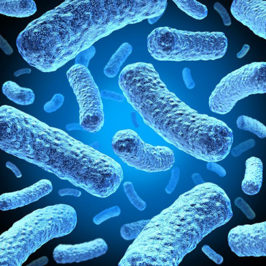 Микробы — правда и вымысел