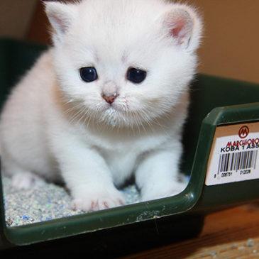 Как ухаживать за кошачьим туалетом