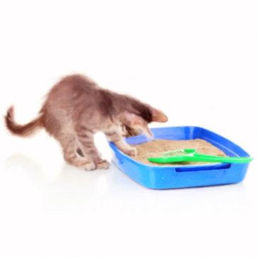 Выбираем наполнитель для кошачьего туалета